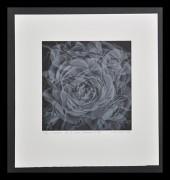 KASAI MASAHIRO: L'arome de la rose sauvage (p-III)