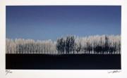 SHIMURA HIROSHI:  Forest Breeze Silver