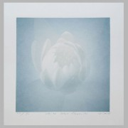 TOKITOH AYAKO:  White Lotus Flower