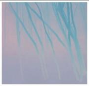 SHIMURA HIROSHI:  Misty Dream/Purple