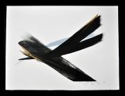 SHINODA TOKO: Arrived Wind