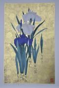 SUGIURA KAZUTOSHI: Iris No. 165