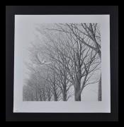 TANAKA RYOHEI: Namiki (Roadside Trees)- Very Rare Print